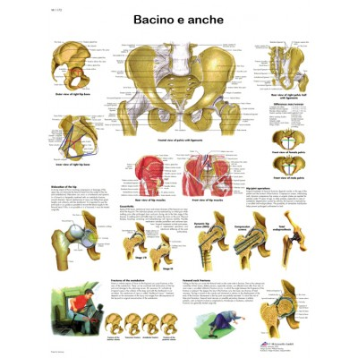 POSTER BACINO E ANCHE - Dim: 50x67 cm